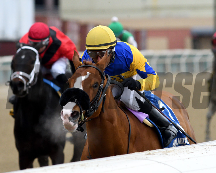 Stonesintheroad wins the 2019 Franklin Square Stakes at Aqueduct<br /> Coglianese Photos/Chelsea Durand