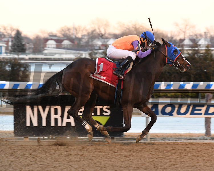 Frostie Anne wins the Biogio's Rose Stakes at Aqueduct Sunday, February 10, 2019. Photo: Coglianese Photos/Susie Raisher