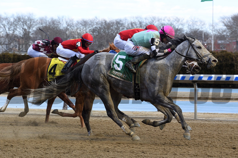 Startwithsilver wins the 2019 Correction Stakes at Aqueduct<br /> Coglianese Photos/Susie Raisher