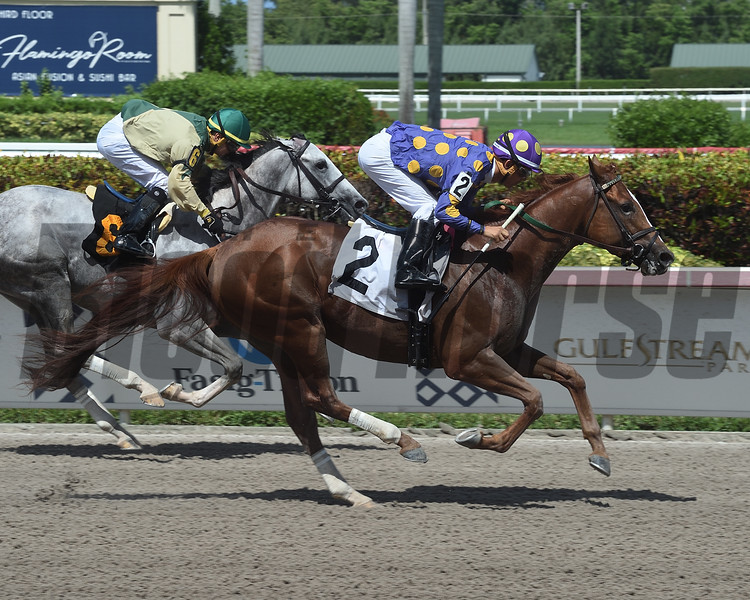 Awesome Action - Maiden Win, Gulfstream Park, July 1, 2019<br /> Coglianese Photos/Lauren King