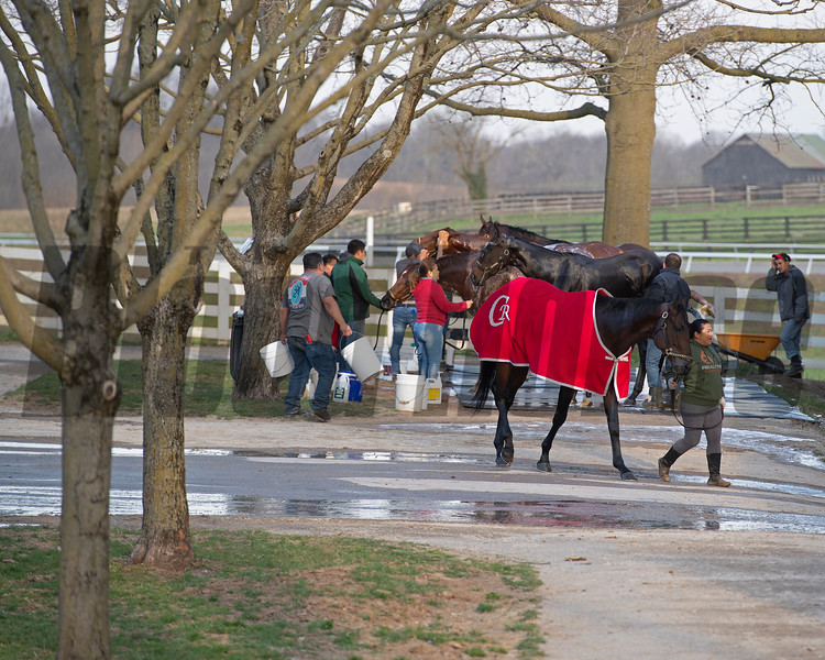 Bath time at the Casse barn.<br /> Morning sales and racing scenes at Keeneland in Lexington, Ky., on April 4, 2019