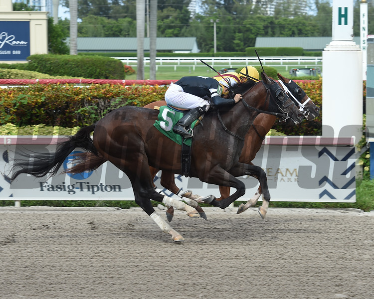 Our Time and Opportunist finish in a dead heat in Race 9 at Gulfstream Park on July 20, 2019<br /> Maiden Special Weight 2yos 6 furlongs     <br /> Coglianese Photos/Lauren King