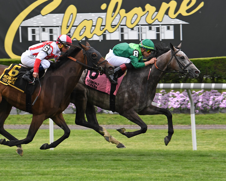 Homerique wins the 2019 New York Stakes at Gulfstream Park<br /> Coglianese Photos/Susie Raisher