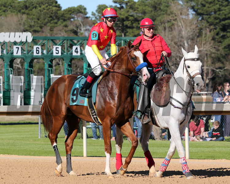 Improbable with Drayden Van Dyke Post Parade The Rebel (GII) (1st Divison) Oaklawn Park March 16, 2019 Photo by: Chad B. Harmon