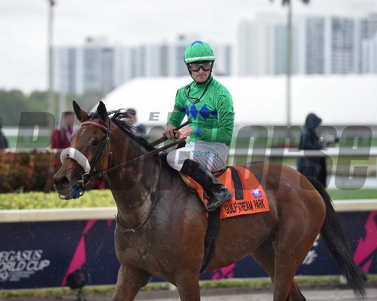 Si Que Es Buena wins the 2018 Via Borghese Stakes at Gulfstream Park<br /> Coglianese Photos/Derbe Glass