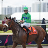 Si Que Es Buena wins the 2018 Via Borghese Stakes at Gulfstream Park<br /> Coglianese Photos/Derbe Glass