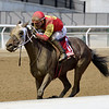 Not About the Nail wins the 2019 Belle Gallantey Stakes at Aqueduct<br /> Coglianese Photos/Joe Labozzetta