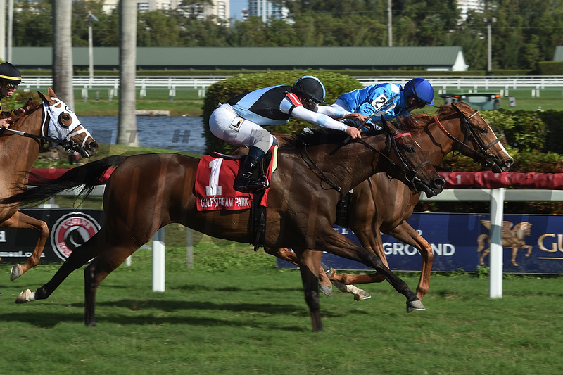 Boxwood wins the 2019 Ginger Brew at Gulfstream Park<br /> Coglianese Photos/Leslie Martin