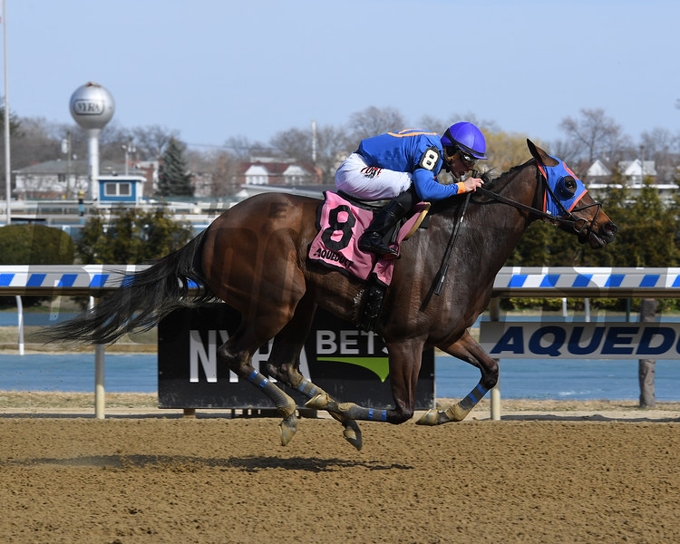 Daria's Angel wins the 2019 Sis City Stakes at Aqueduct<br /> Coglianese Photos/Chelsea Durand