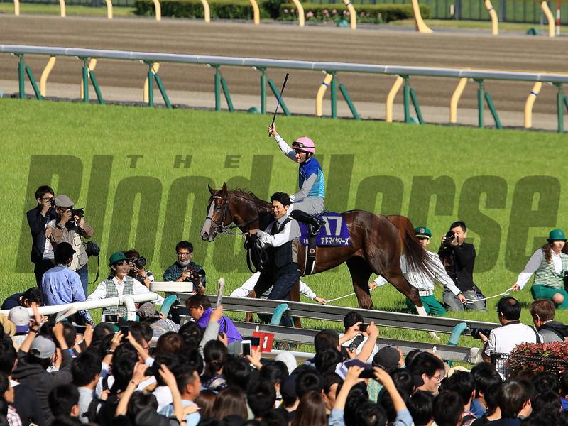 Admire Mars wins the 2019 NHK Mile Cup at Tokyo Racecourse. Photo: Naoji Inada