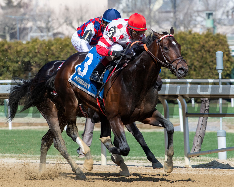 Mind Control wins the Bay Shore Stakes at Aqueduct Saturday, April 6, 2019. Photo: Skip Dickstein