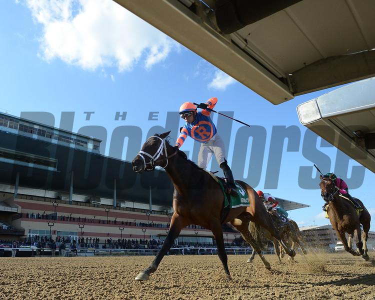 Always Shopping wins the 2019 Gazelle Stakes at Aqueduct. Photo: Coglianese Photos