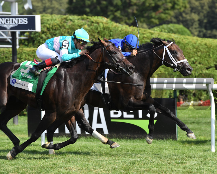 Lucullan wins the 2019 Lure Stakes at Saratoga <br /> Coglianese Photos/Janet Garaguso