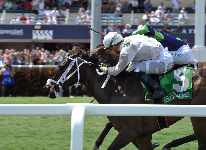 Trenchtown Cat wins the 2019 Sanibel Island Stakes at Gulfstream Park<br /> Coglianese Photos/Lauren King