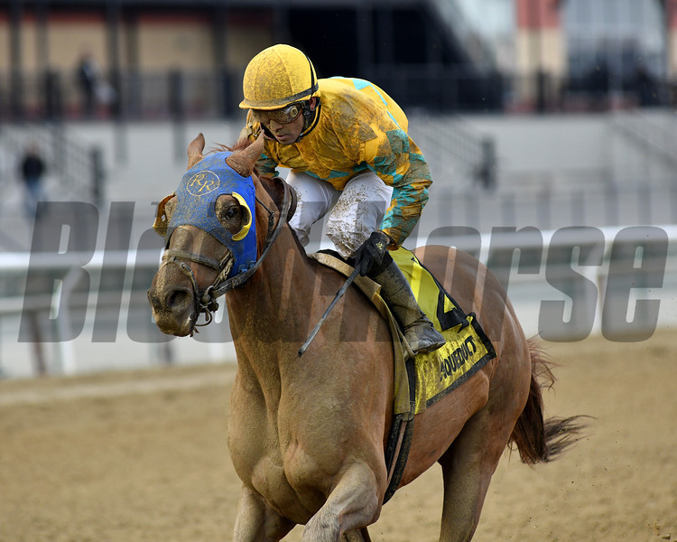 Potomac wins the 2019 More To Tell Stakes at Aqueduct<br /> Coglianese Photos/Elsa Lorieul