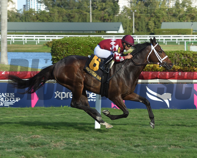 A Thread of Blue wins 2019 Dania Beach Stakes at Gulfstream Park Sunday, February 3, 2019. Photo: Coglianese Photos/Leslie Martin