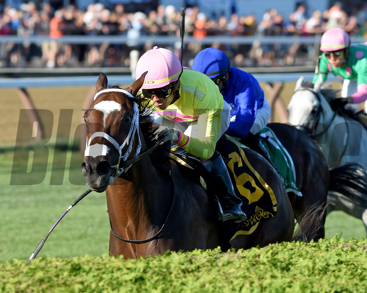 Shekky Shebaz wins the 2019 Lucky Coin Stakes at Saratoga<br /> Coglianese Photos/Chelsea Durand