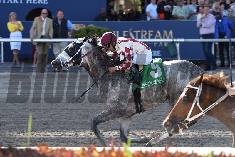 Marconi wins the 2019 Skip Away Stakes at Gulfstream Park.<br /> Coglianese Photos/Lauren King
