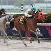 Aztec Sense wins the 2019 Fred W. Hooper Stakes at Gulfstream Park<br /> Coglianese Photos/Zoe Metz