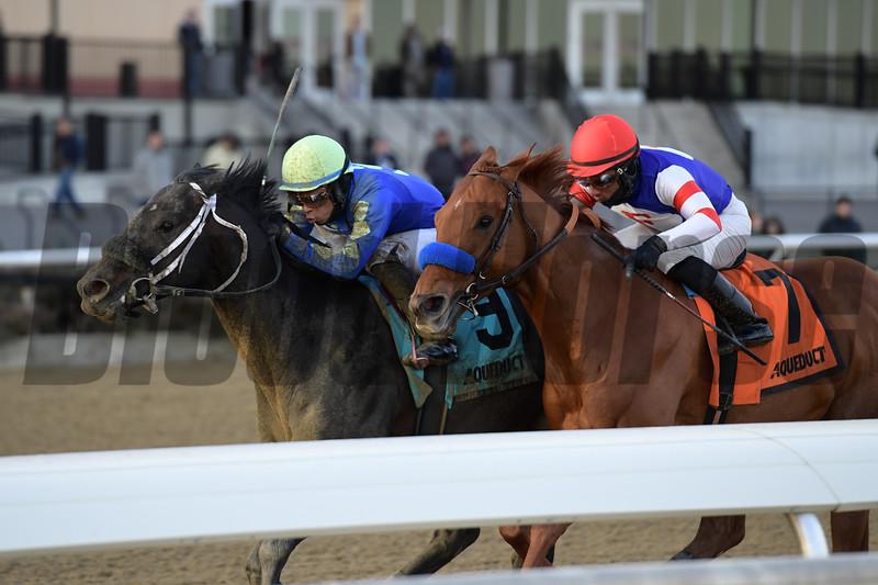 Honor Up wins the 2019 Say Florida Sandy Stakes at Aqueduct<br /> Coglianese Photos/Joe Labozzetta