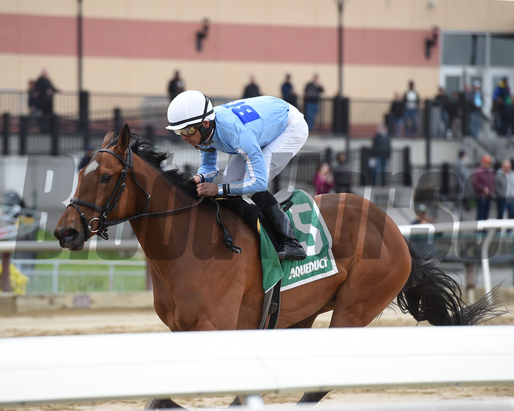 Newly Minted wins the New York Stallion Stakes Saturday, April 20, 2019 at Aqueduct. Photo: Coglianese Photos/Elsa Lorieul