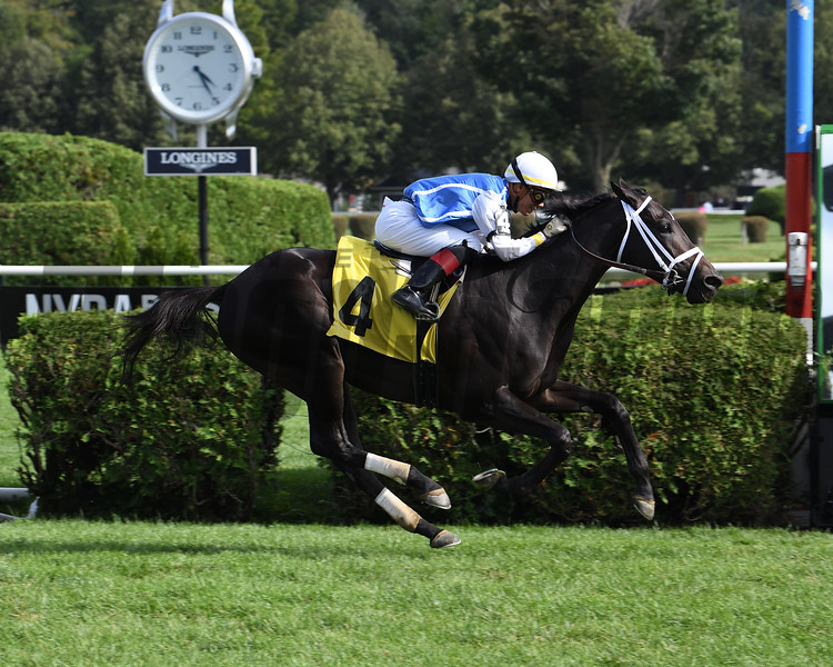 No Word wins 2019 Maiden at Saratoga. Photo: Coglianese Photos