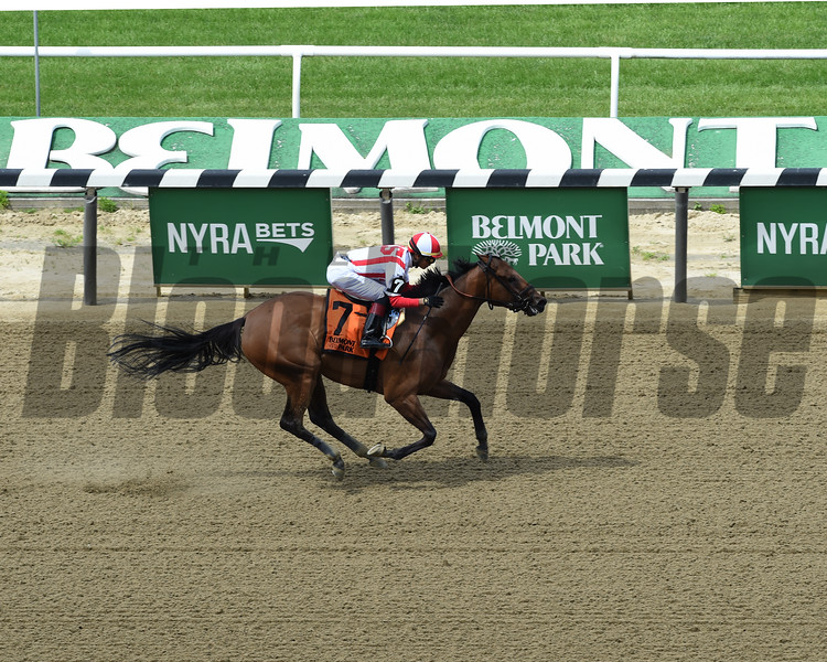 Separationofpowers wins the 2019 Bed o' Roses Invitational Stakes at Belmont Park<br /> Coglianese Photos/Janet Garaguso