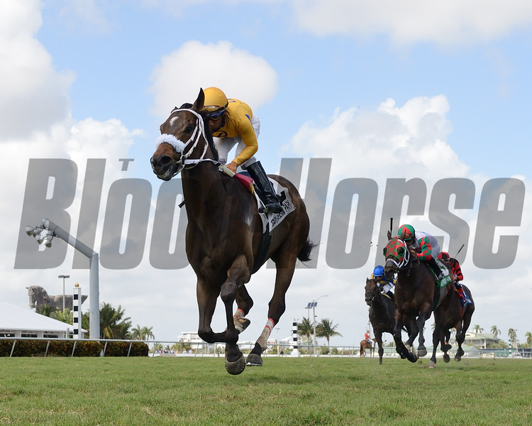 Imprimis wins the 2019 Silks Run Stakes at Gulfstream Park<br /> Coglianese Photos/Leslie Martin