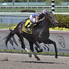 Garter and Tie wins the 2019 Ocala Stakes at Gulfstream Park<br /> Coglianese Photos/Ryan Thompson