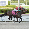 Wildwood's Beauty wins the 2019 Sheer Drama Stakes at Gulfstream Park<br /> Coglianese Photos/Lauren King