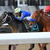 Honor Up wins the 2019 Say Florida Sandy Stakes at Aqueduct<br /> Coglianese Photos/Annette Jasko