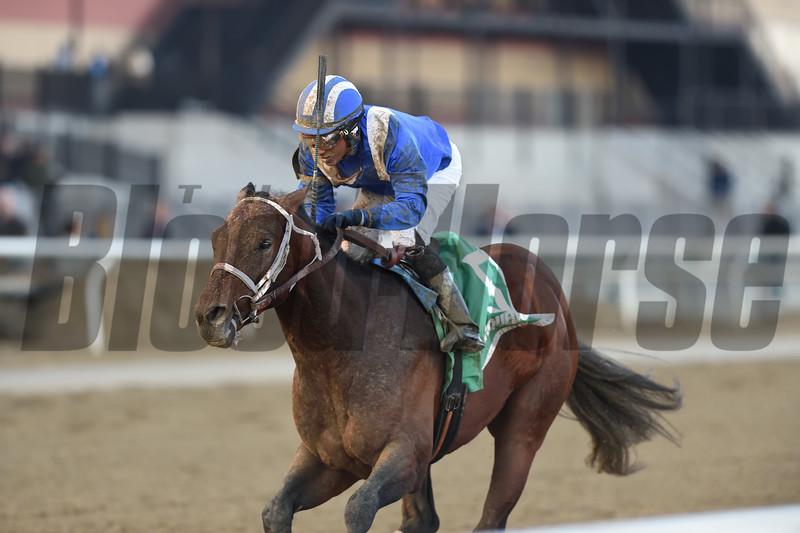 Haikal wins the 2019 Gotham Stakes<br /> Coglianese Photos/Chelsea Durand