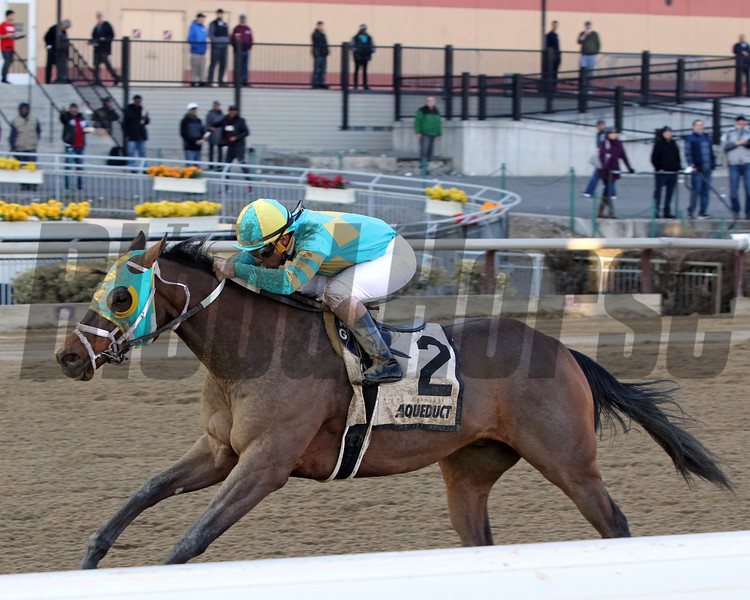Do Share with Reylu Gutierrez win the 44th Running of The Tom Fool (GIII) at Aqueduct on March 9, 2019. Photo By: Chad B. Harmon
