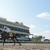 Trenchtown Cat wins the 2019 Ana T. Stakes at Gulfstream Park<br /> Coglianese Photos/Lauren King