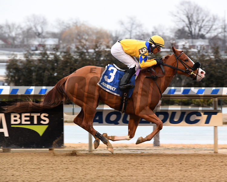 Stonesintheroad wins the 2019 Franklin Square Stakes at Aqueduct<br /> Coglianese Photos/Susie Raisher