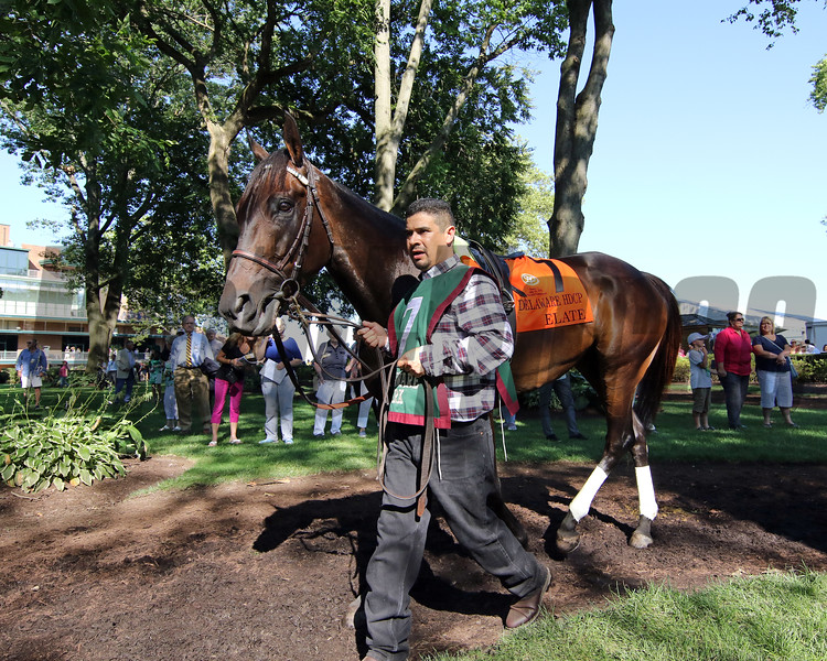 Elate in the paddock prior to winning the 82nd Running of the Delaware Handicap (GII) at Delware Park on July 13, 2019. Photo: Chad B. Harmon