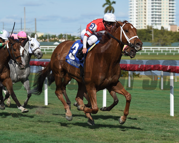 Big Changes wins the 2019 Sunshine Millions Turf at Gulfstream Park<br /> Coglianese Photos