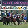 The 2019 Pegasus World Cup Turf Start<br /> (won by Bricks and Mortar)<br /> Coglianese Photos/Tim Sullivan