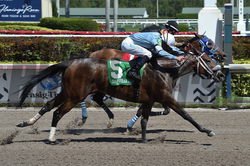 Brunette Princess and Miss Marcela deadheat in the 2019 Any Limit Stakes at Gulfstream Park.<br /> Coglianese Photos/Leslie Martin