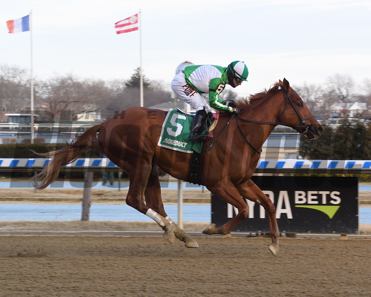 Mr. Buff wins the 2019 Jazil Stakes at Aqueduct<br /> Coglianese Photos/Chelsea Durand
