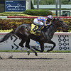 Garter and Tie wins the 2019 Ocala Stakes at Gulfstream Park<br /> Coglianese Photos/Lauren King