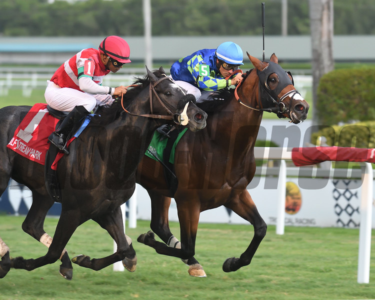 Vow Me Now wins the English Channel Stakes Saturday, May 5, 2019 at Gulfstream Park. Photo: Coglianese Photos/Cris Morales