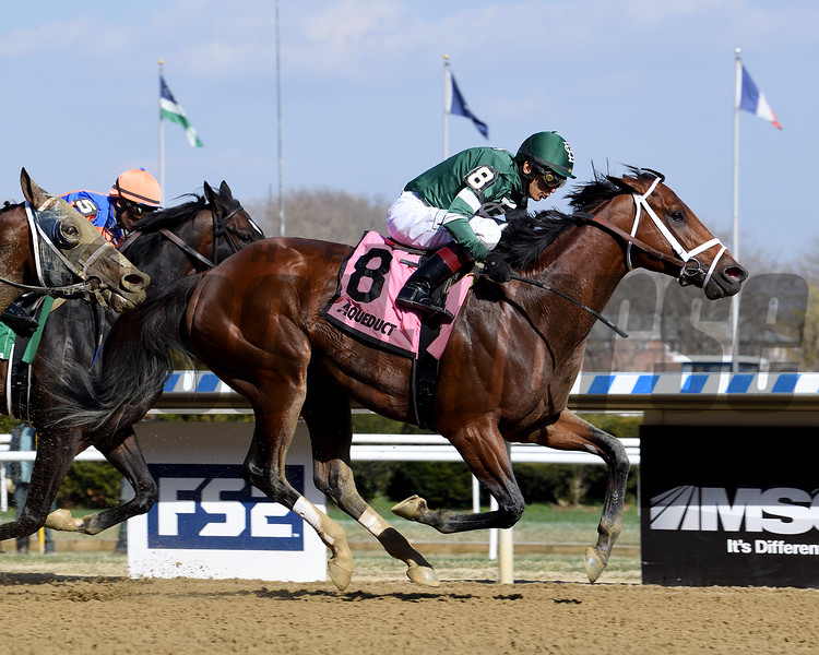 Life's a Parlay wins the 2019 Excelsior Stakes at Aqueduct<br /> Coglianese Photos/Viola Jasko