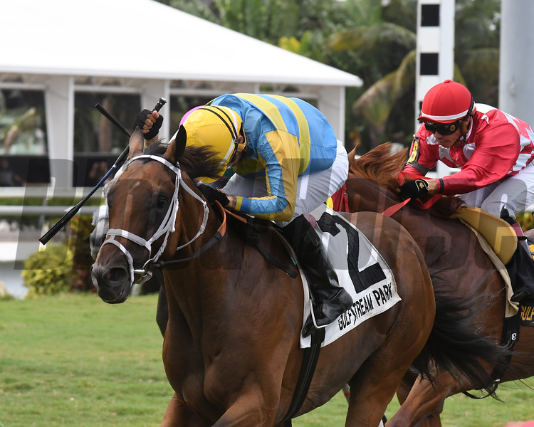 Cowboy's Hero wins the Mecke Stakes Sunday, July 7, 2019 at Gulfstream Park. Photo: Coglianese Photos/Ryan Thompson