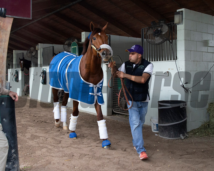 Accelerate leaves Gulfstream Park after the 2019 Pegasus World Cup<br /> Coglianese Photos/Zoe Metz