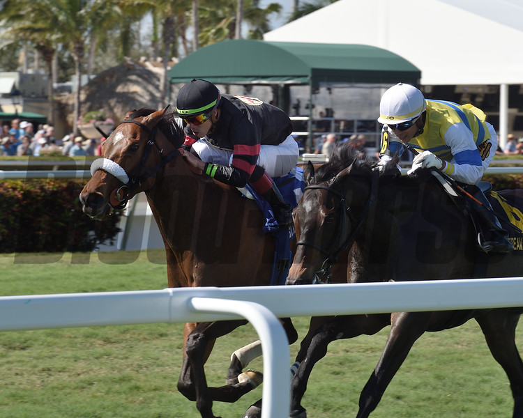 Holy Helena wins the 2019 The Very One at Gulfstream Park<br /> Coglianese Photos/Derbe Glass