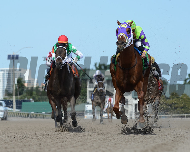 Seismic Jolt wins the 2019 Limehouse Stakes at Gulfstream Park   <br /> Coglianese Photos/Leslie Martin