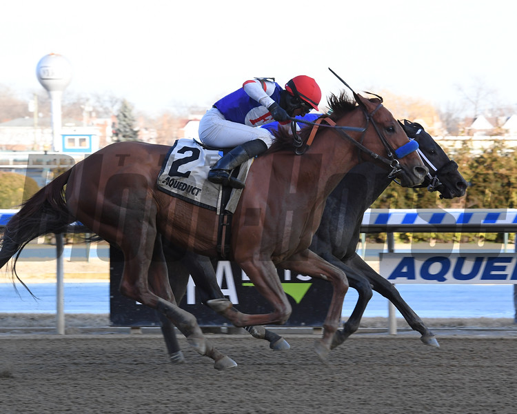 Honor Up wins the Haynesfield Stakes at Aqueduct Sunday, February 17, 2019. Photo: Coglianese Photos/Susie Raisher