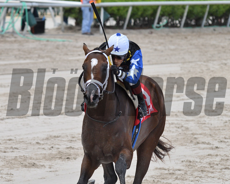 Chance It wins the 2019 FTBOA Florida Sire Dr. Fager Stakes at Gulfstream Park<br /> Coglianese Photos/Ryan Thompson