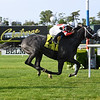 Pole Setter wins the 2019 Paradise Creek Stakes at Belmont Park<br /> Coglianese Photos